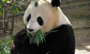 Животные Китая