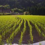 Сельское хозяйство кнр
