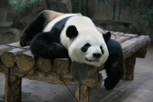 зоопарк Ханчжоу