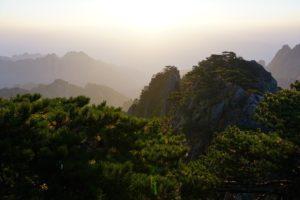 Деревья на Хуаншань