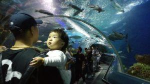 Шанхай океанариум