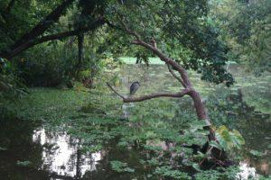 Тайбэй ботанический сад